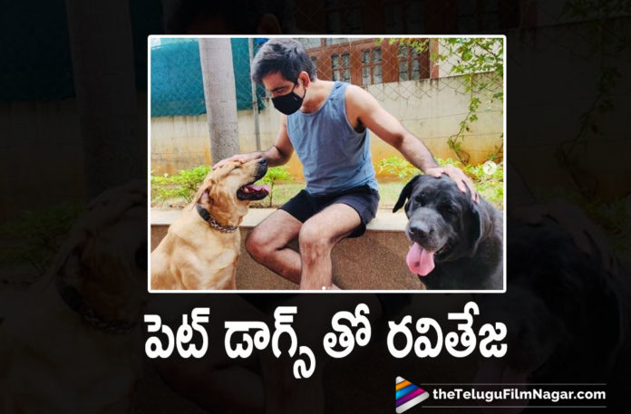 Mass Maharaja Ravi Teja Shares A Pic With His Pet Dogs On Social Media